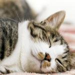 cat banner jyoshi 150x150 - 【先行接種】ファイザー製コロナワクチンを接種した感想・待機時間・痛み・副作用など